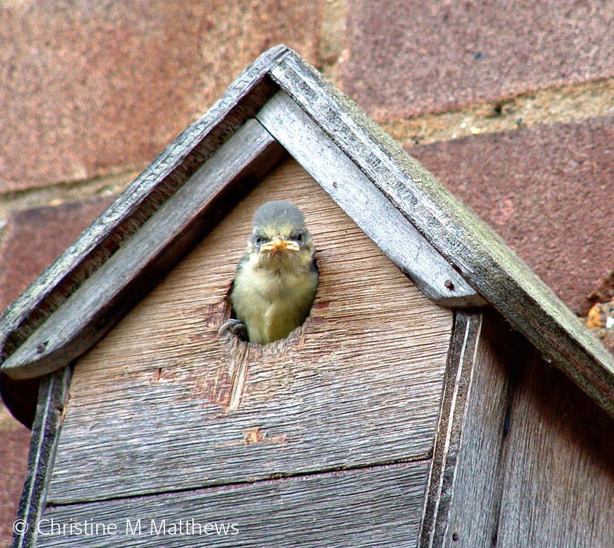 #NationalNestBoxWeek is now in full swing and in our new Demog Blog, @HazelEEvans talks about why nest boxes are important, and how you can give birds a helping hand getting settled in for the breeding season. Read it all on btoringing.blogspot.co.uk!