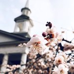 70° in February is making us anxious for spring! 🌸 #HPU365 📷 by: Maddy McCracken