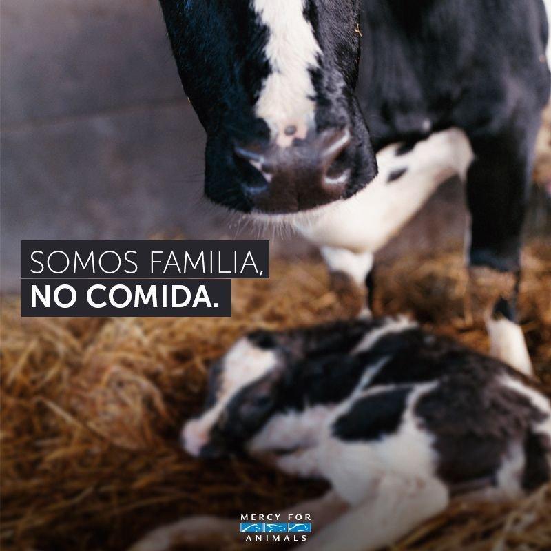 Ellos también tienen familia. #AnimalesN...