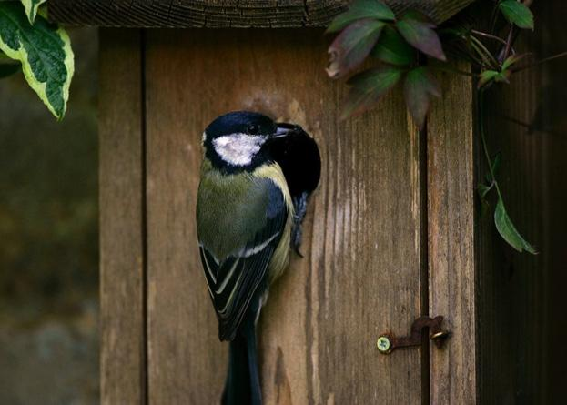 #NationalNestboxWeek How to get more from your nestbox Here are 5 ways you can make the most of offering homes to your garden birds: ow.ly/qjnp30iq9P8 📷 Tim Graham / Getty