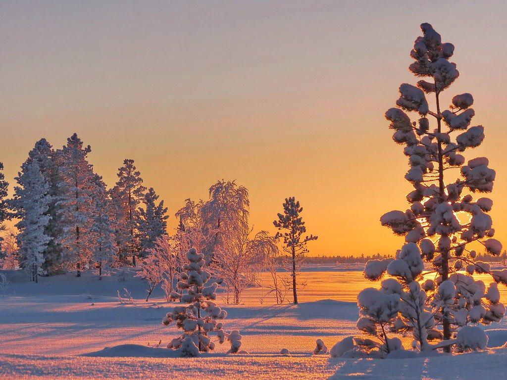 картинки зимний снежный коми лес скоро