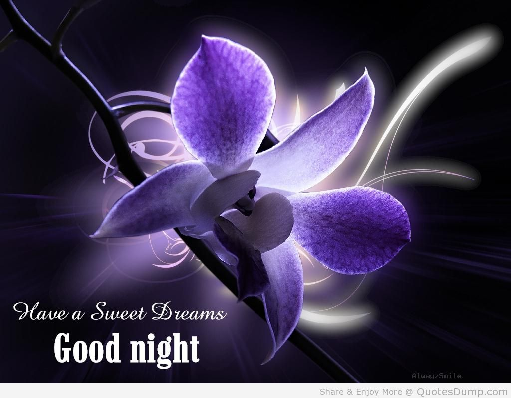 SWEET DREAMS..... TAKE CARE..... MAY ALLAH S.W.T PROTECT AND BLESS YOU WITH  LONG LIFE HEALTH WEALTH LOTS OF HAPPINESS LOTS OF SUCCESS ...