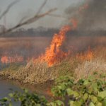 #USFWS firefighters plan to conduct a 238 acre prescribed fire today at Santee NWR #SCfire #rxfire #GoodFires 🔥
