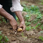 Image for the Tweet beginning: Have you given an agriculture