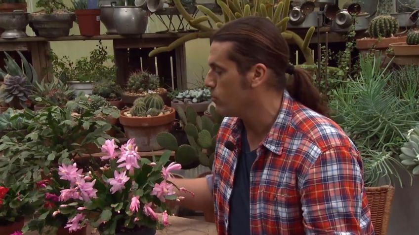 los consejos de jardinera del fin de semana 17 y 18 de febrero de 2018 os - Bricomania Jardineria