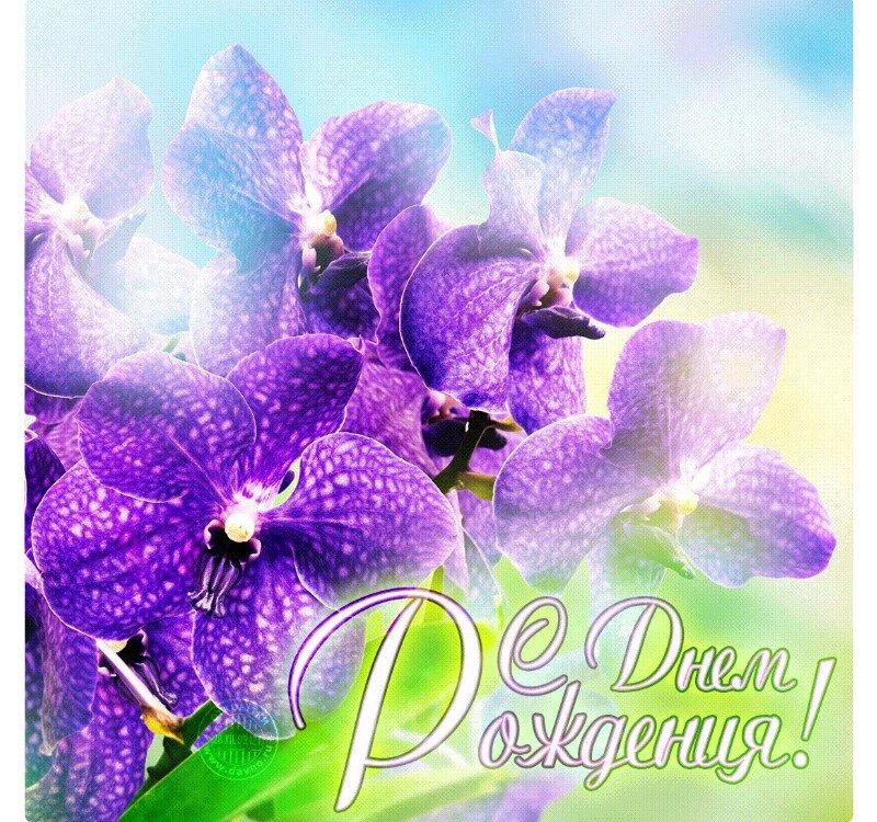 Днем, поздравление с днем рождения женщине с картинкой орхидей