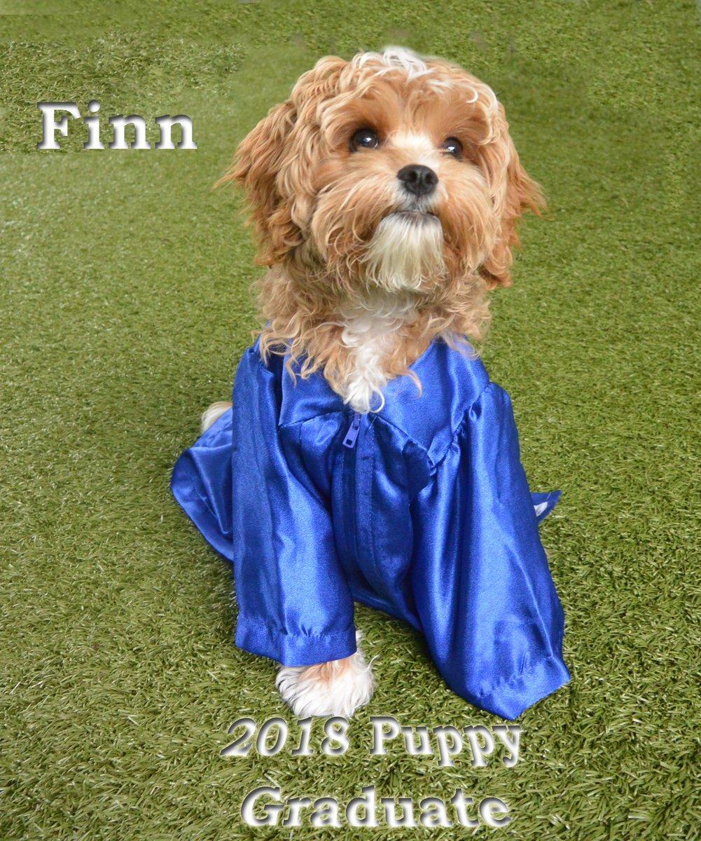 Morris Animal Inn On Twitter Finn Graduates Puppy Daycare Today