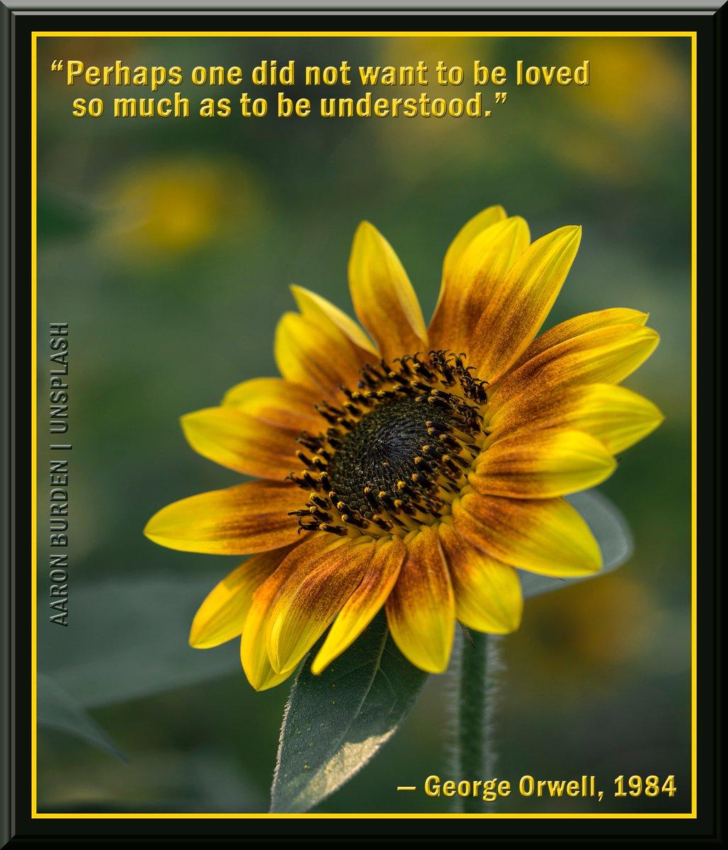 buy Understanding Educational