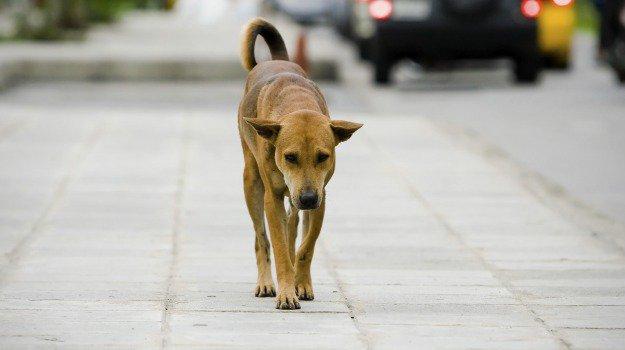 Continua la #strage dei #cani avvelenati a #Sciacca, sale a 30 il numero dei morti https://t.co/Okn7sRBEKg
