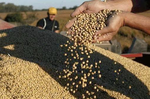 Granos | Las cotizaciones del mercado de granos del 26 / 02/ 2018