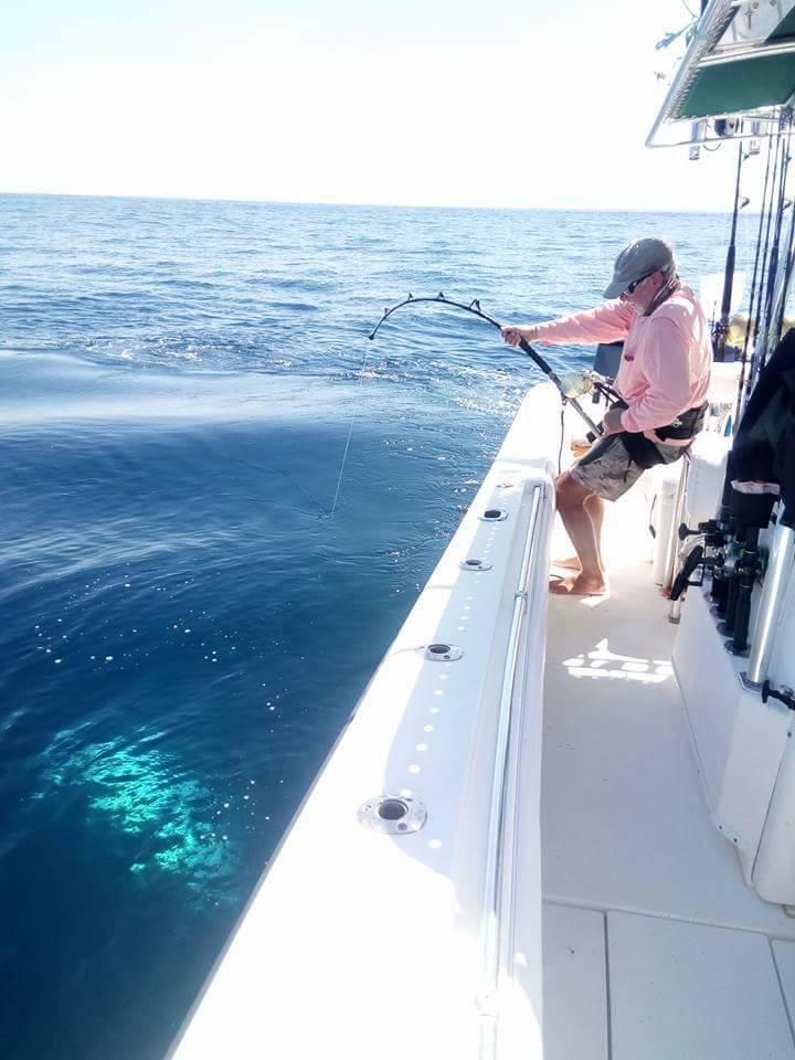Hannibal Bank, Panama - Pescador released a Black Marlin (550).