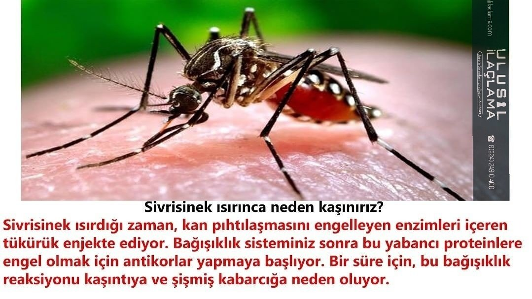 Sivrisinekler için ulusal çare