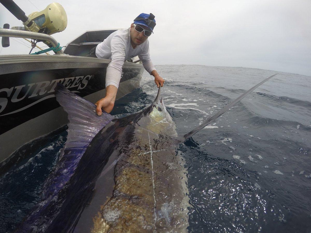 Whangamumu, NZ - Yonkers released a Striped Marlin.