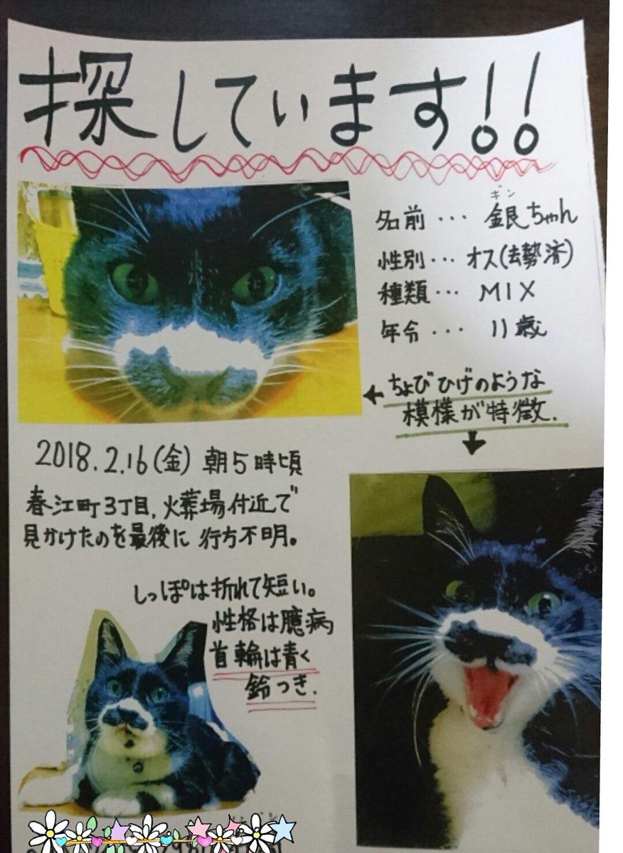 愛猫を探しています!! 東京都江戸川区 を中心に探してますが見つかりません(´;...