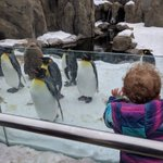 Image for the Tweet beginning: Penguins!