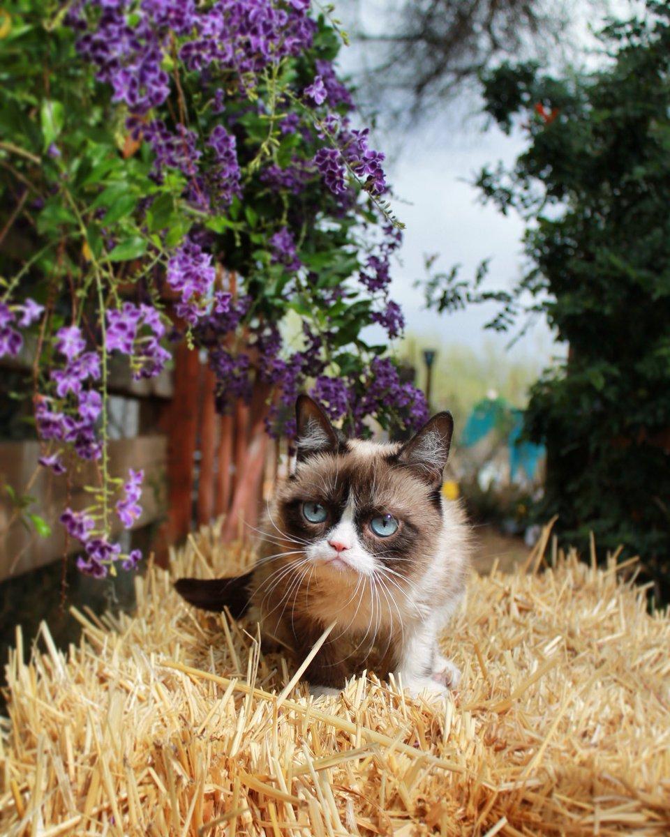 Grumpy Cat (@RealGrumpyCat) on Twitter photo 2018-02-17 20:00:35