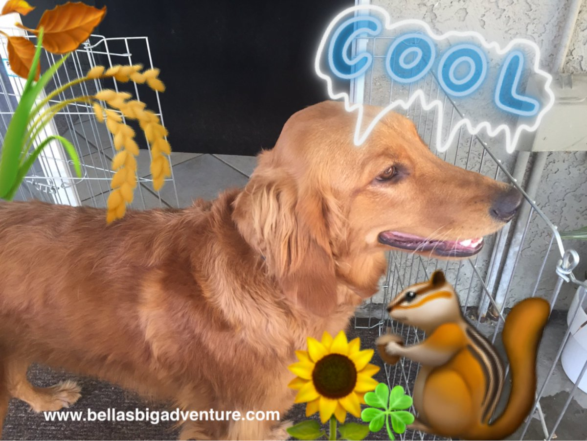From a little #golden_retrieve, I don&#39;t think like could get any better!   http://www. bellasbigadventure.com  &nbsp;   #dogs #travel #adventure #America <br>http://pic.twitter.com/kAz4sVeu4P