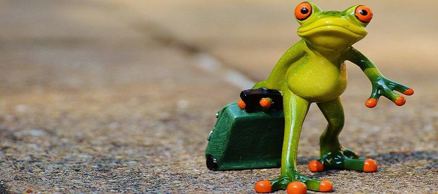 лягушка путешественница фото картинки долго
