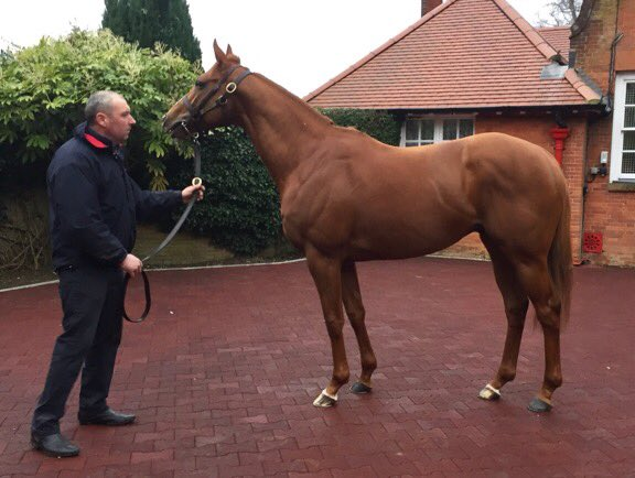 Cheveley Park Stud bred Simply Brilliant, by Frankel ex Red Bloom (Senator) wins in Hong Kong. Congratulations to all the connnections. Formally with @RichardFahey - @CPStudOfficial breeding winners on the international stage 🥇🏆 Red Bloom visits #ulysses
