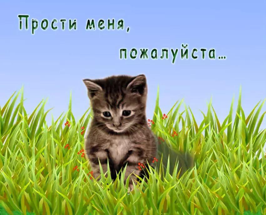 Открытки прости меня котенок, рисунок