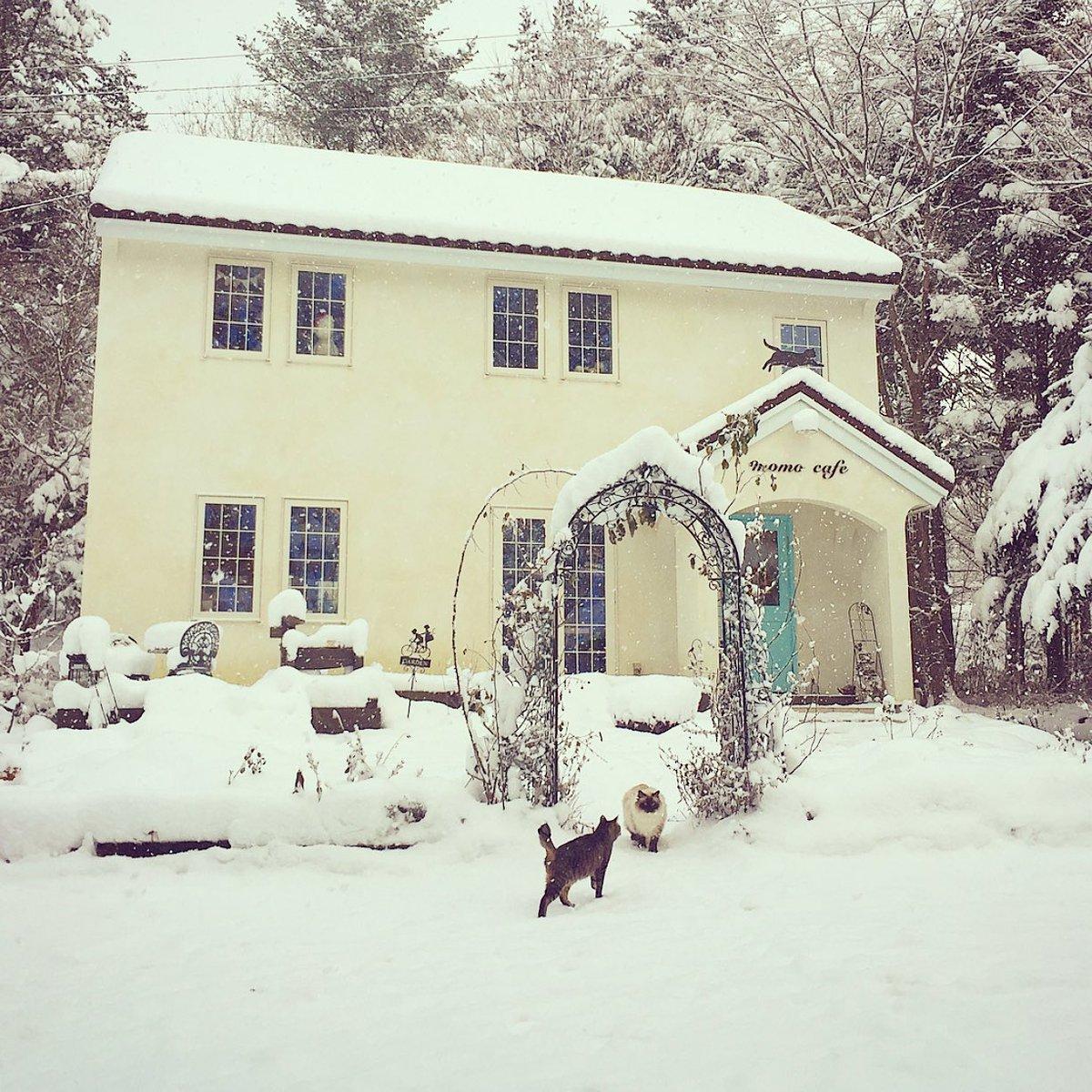 ものすごく寒くて、雪がたくさん降って、冬はとても大変な季節なのだけれど、美しい雪景色ともっこもこになる猫たちの姿が毎年楽しみでならないです。 ( ๑・ㅂ・)特にルルは立派になります。