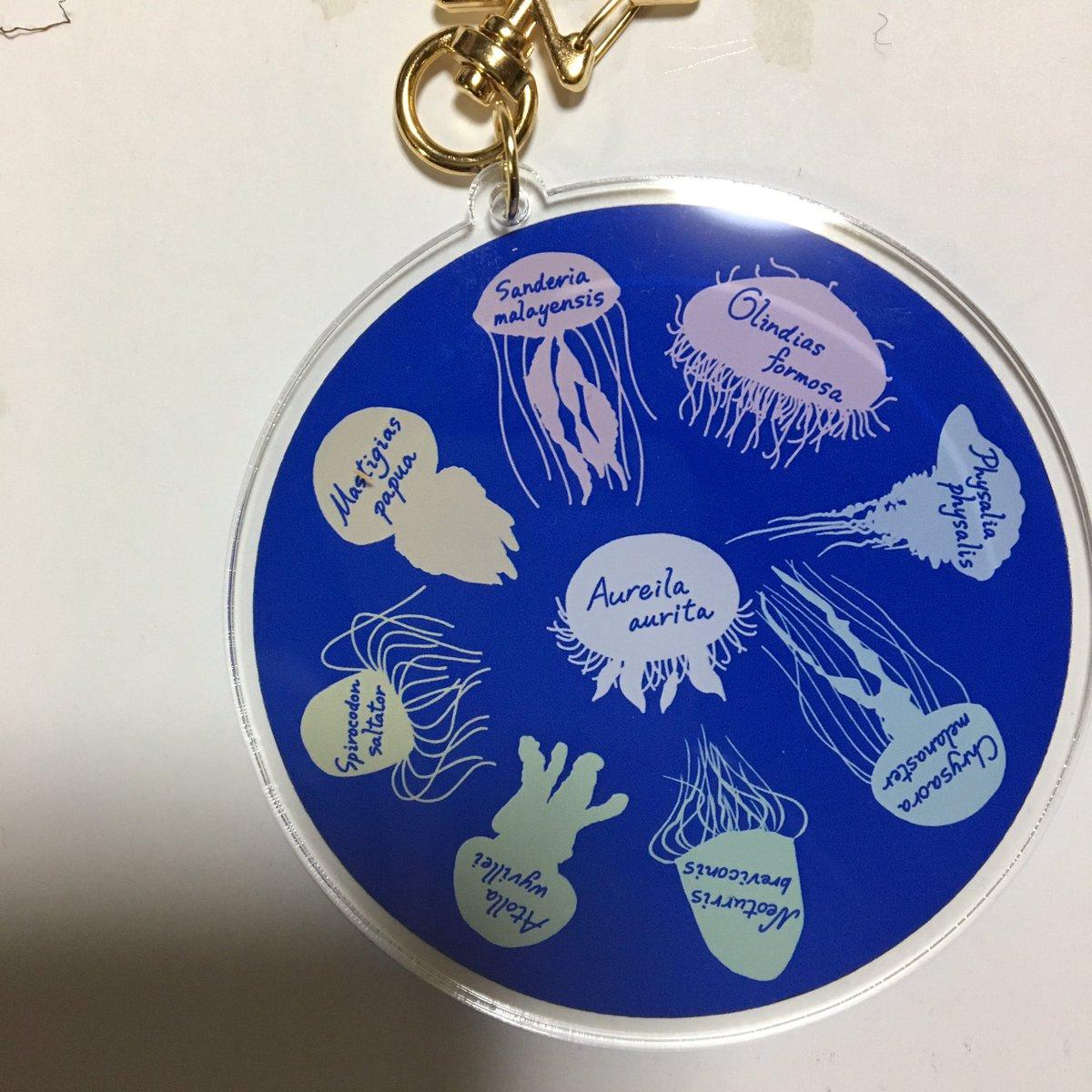 あなたと語る生き物展 戦利品♪ 京楽堂さん(@kyouraku_stamp)のクラゲキーホルダー。 とてもリアルでクラゲ研究者も太鼓判を押したと言う逸品♪裏面の学名で答え合わせが出来る仕様(笑)  #語る展