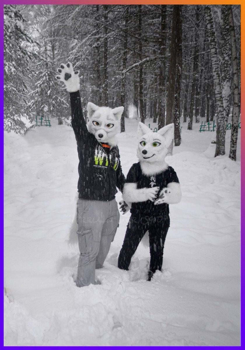 Our couple of cute Arctic foxes in their natural habitat <3  #furry #fursuit #foxfursuit #toonyfursuit #irruanworkshop #fursuitstudio #arcticfox #fursuitwalk