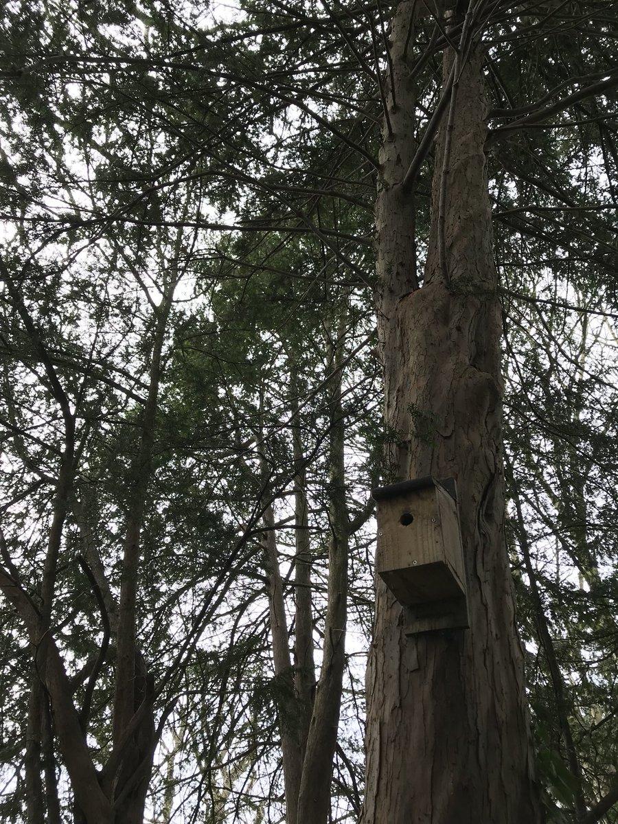 Bonus bird box installed in The Wood for #NationalNestboxWeek!