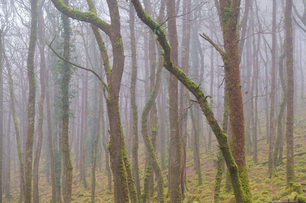 Misty morning. #Dartmoor #Misty #trees h...