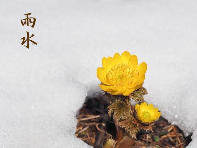 本日2月19日は雨水、二十四節気のひとつです。 陽気が地上に昇り、空から降る雪は雨となり、雪氷が解けはじめる頃です。  14日には「春一番」が吹いたと発表され、3月中旬の暖かさとなりました。寒さは再び戻ってきてはいますが、梅もほころび始め春の気配が感じられます。  #晴明神社 #京都 #雨水