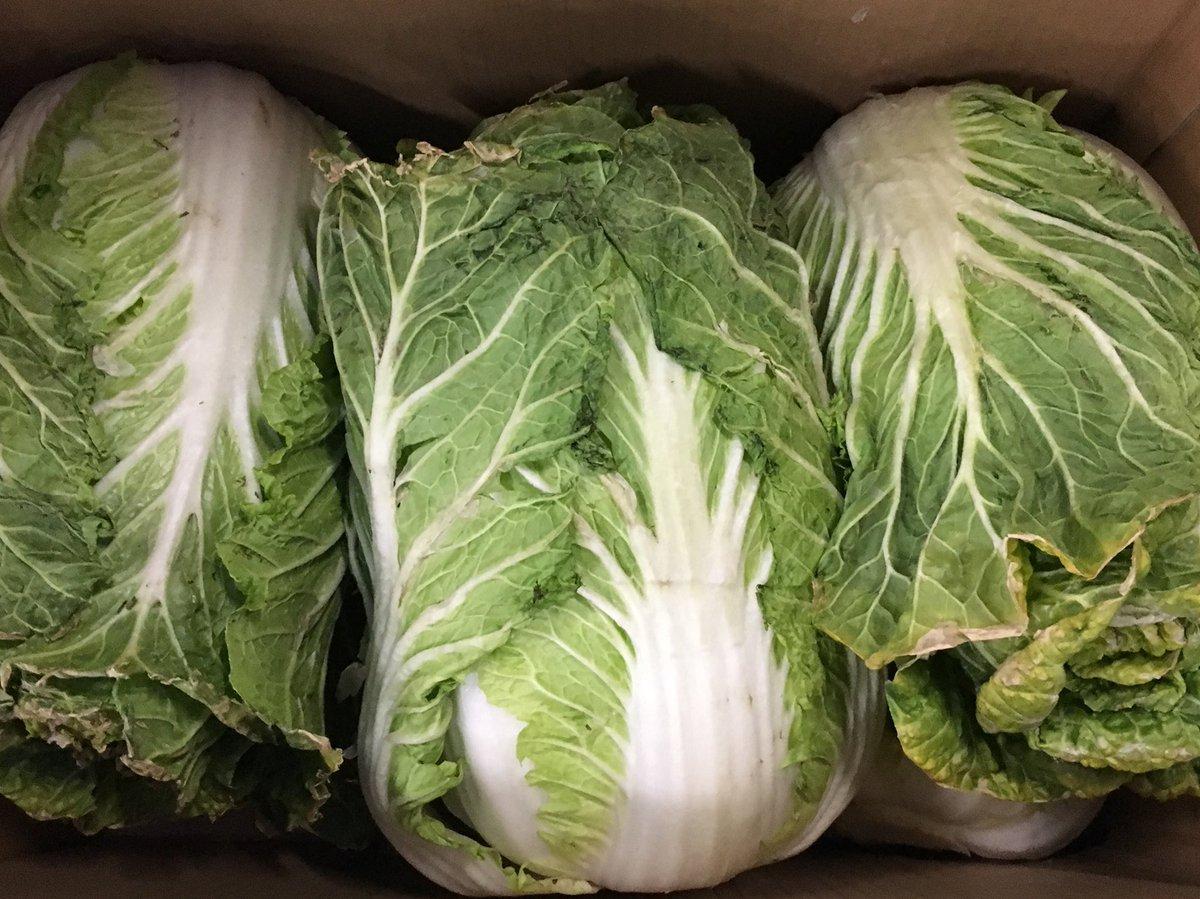 高騰が続く白菜。八百屋さんが浮かない顔で言ってました。「お客さんから『品物よくないのにこんなに高いの?』って言われるのが辛いよ」相場が高いのは品薄のため。作柄悪いのでよいものがとれません。畑ではこれ以下の品物が大量に廃棄されていることをお察しください。 <(_ _;)>