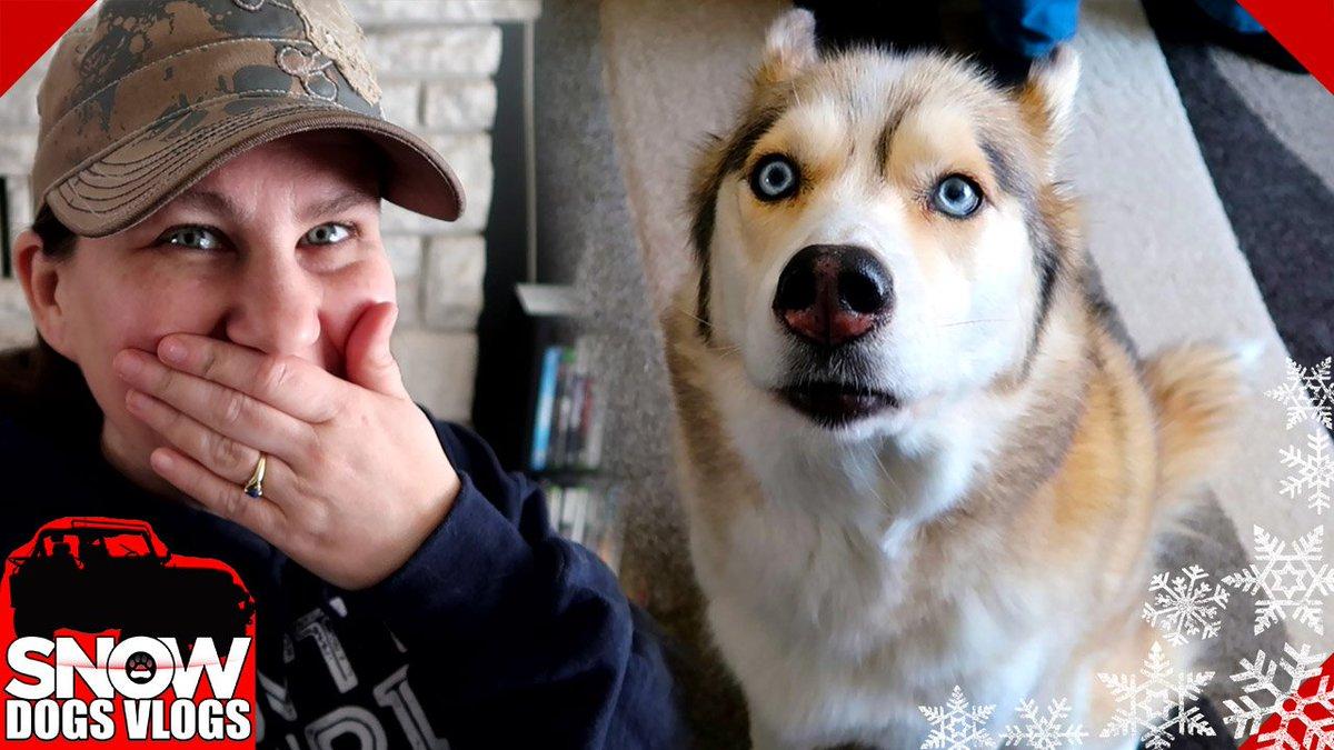 Stupid Dogs Stream