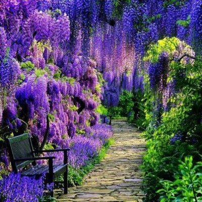 test Twitter Media - What could be more magical than a Wisteria Walk?  #garden #fragrance https://t.co/gIKzfub0fL