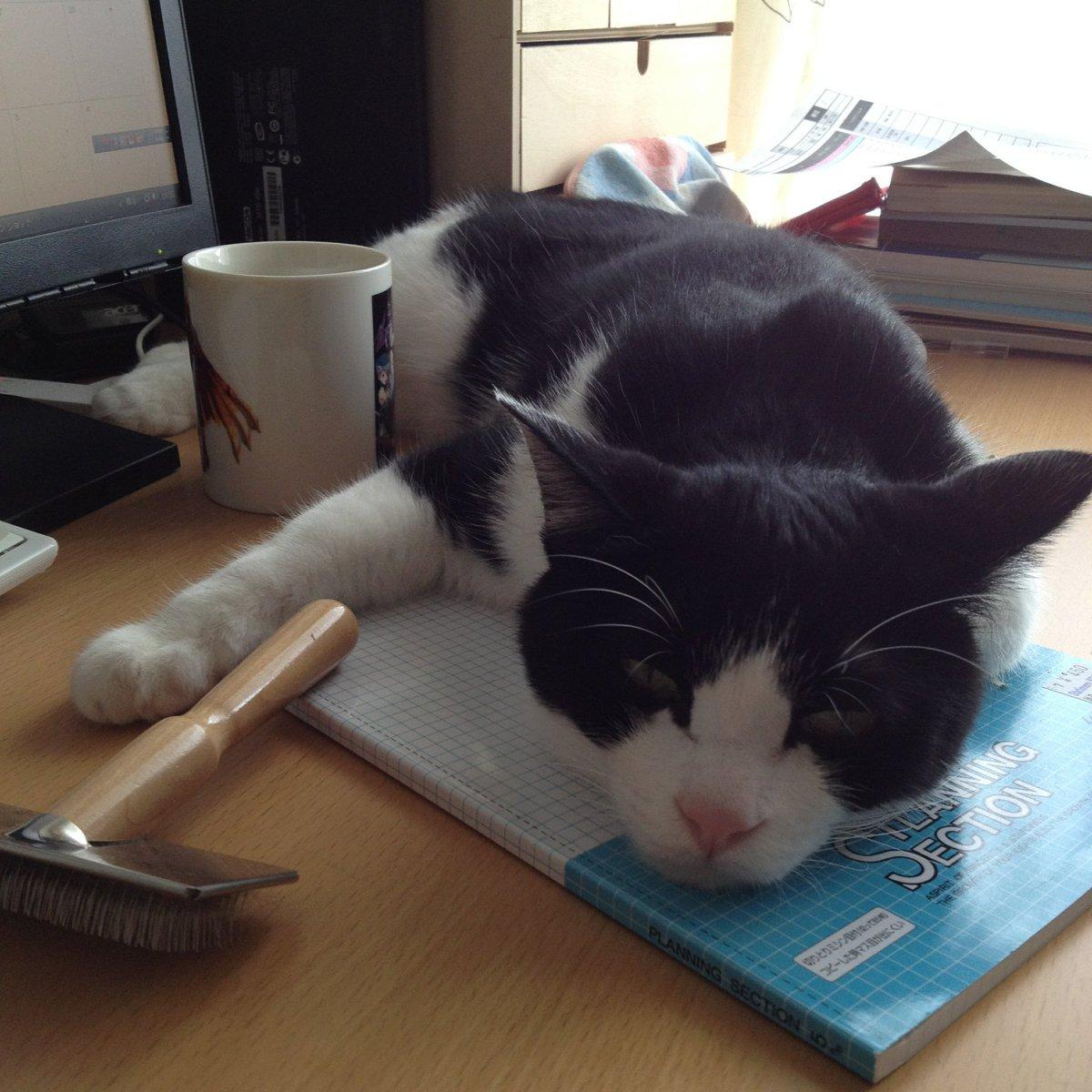 我が家の雄山(猫)だと、Favは稼ぐがRetweetがあまり伸びず、さらに引っ越...