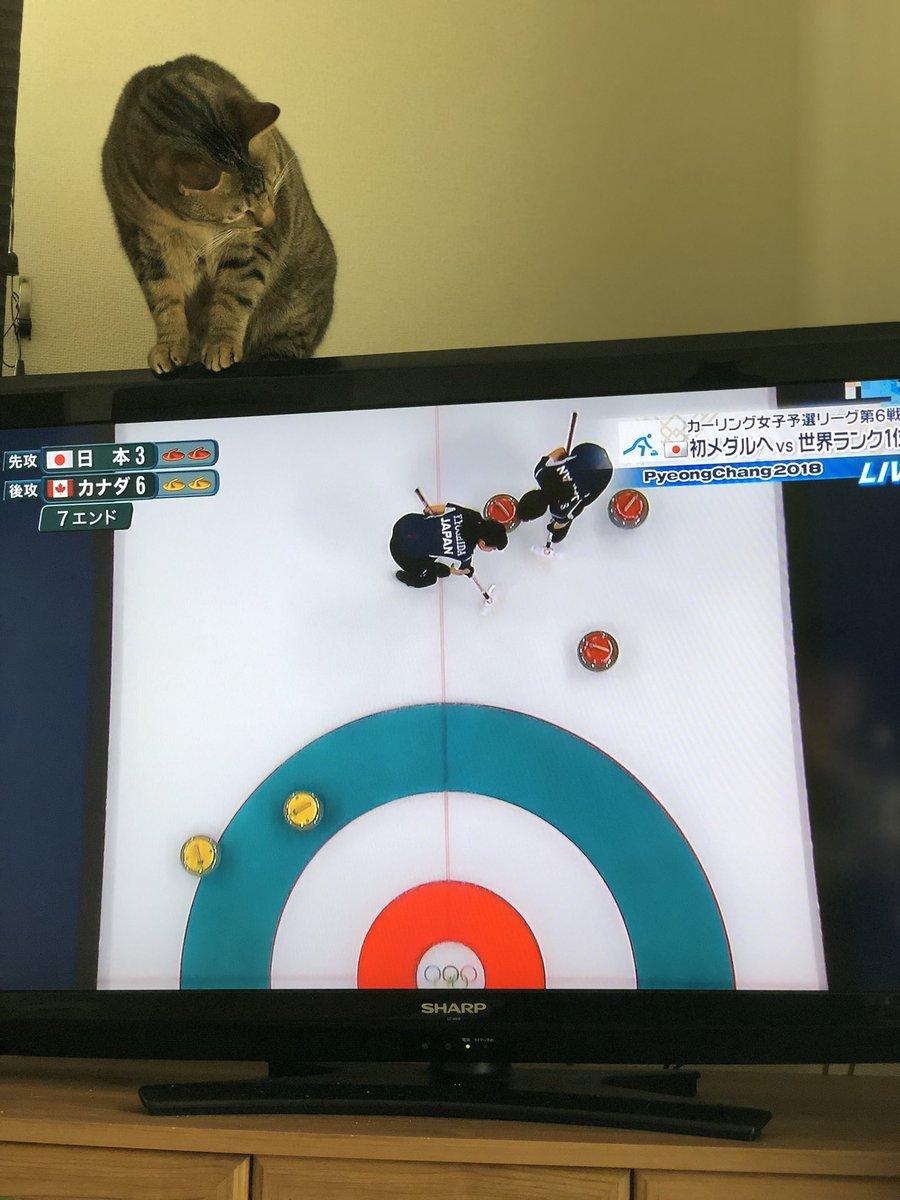 ありがとう…カーリングのお手伝いはもう大丈夫だから…お願いテレビから離れてええええええ壊れるーーー(´°̥̥̥̥̥̥̥̥ω°̥̥̥̥̥̥̥̥`) 何度降ろしてもカーリングに参加したい猫…