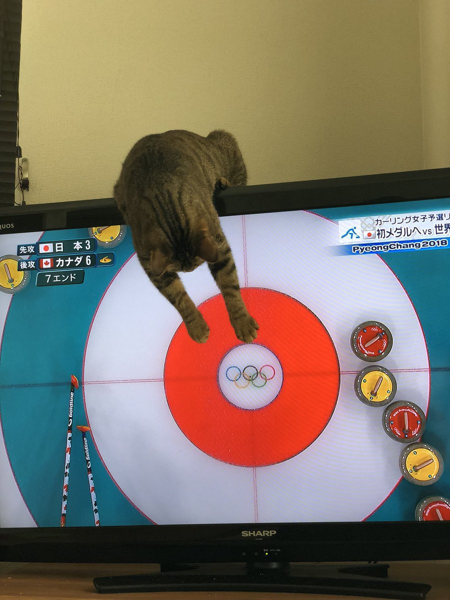 ありがとう…カーリングのお手伝いはもう大丈夫だから…お願いテレビから離れてええええええ壊れるーーー(´°̥̥̥̥̥̥̥̥ω°̥̥̥̥̥̥̥̥`) 何度降ろしてもカーリングに参加したい猫…🥌🐈