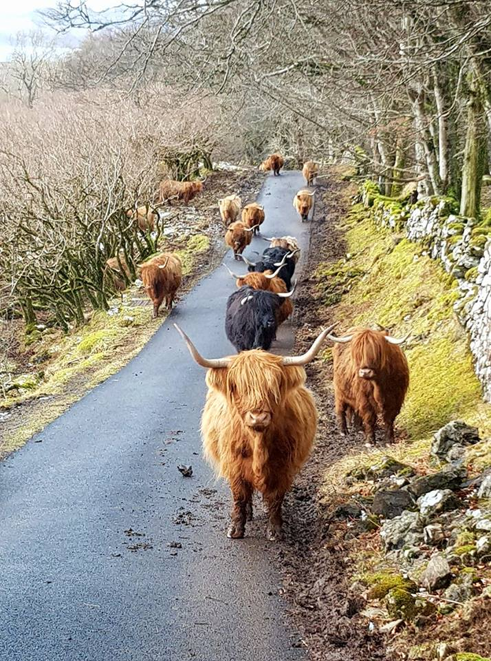 Rush hour on the ISLE OF MULL  Photo By : Colin Morrison  #lovescotland ЪЈ┤заЂДзаЂбзаЂ│заЂБзаЂ┤заЂ┐ЪЈ┤заЂДзаЂбзаЂ│заЂБзаЂ┤заЂ┐ЪЈ┤заЂДзаЂбзаЂ│заЂБзаЂ┤заЂ┐ #1sttheworld