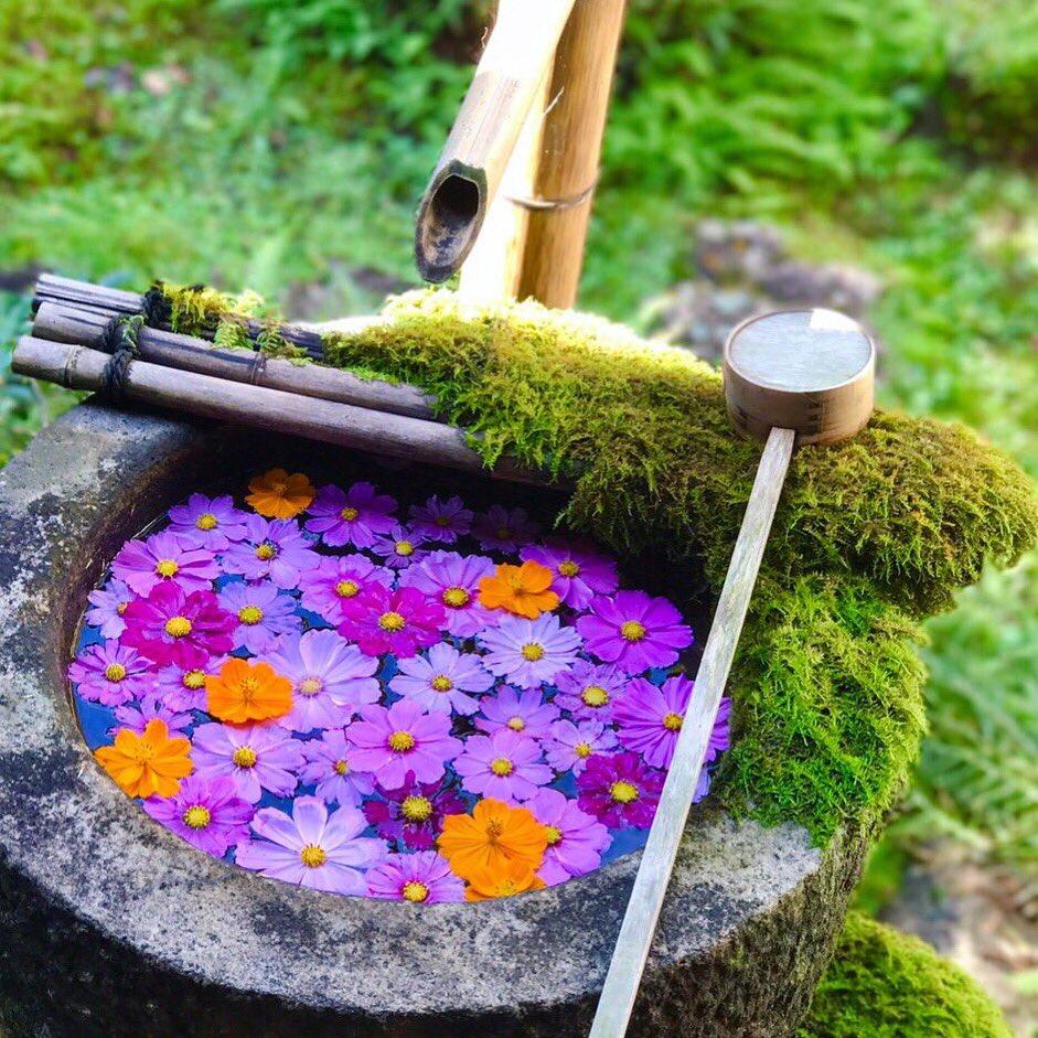 楊谷寺さんの花を乗せる水手鉢シリーズが好きでして