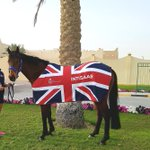 Intisaab is settling in well in Qatar ahead of his run in the Dukhan Sprint on Saturday! #TeamBritishRacing @GBRI_UK