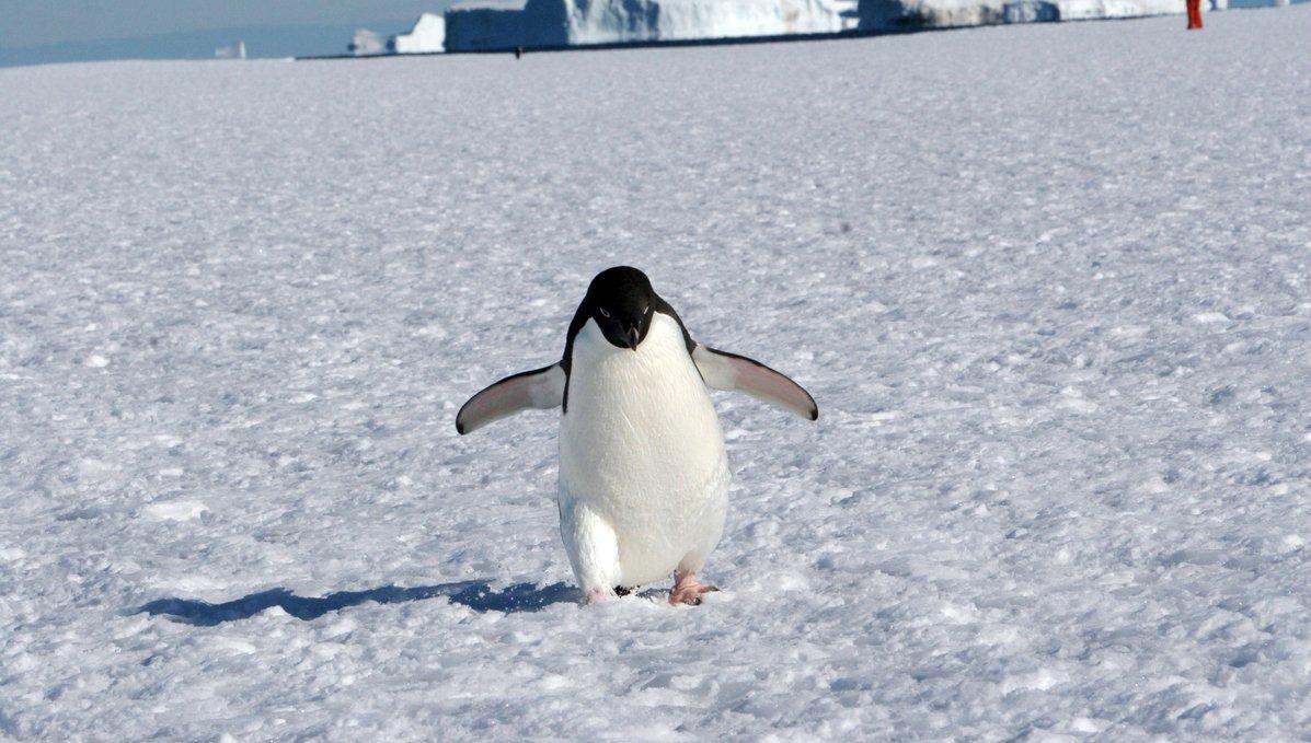 En 2018 podemos crear la mayor área protegida del mundo. �� Firma y protege el Antártico» https://t.co/J5absHGVbb �� https://t.co/lchmmOPQdm