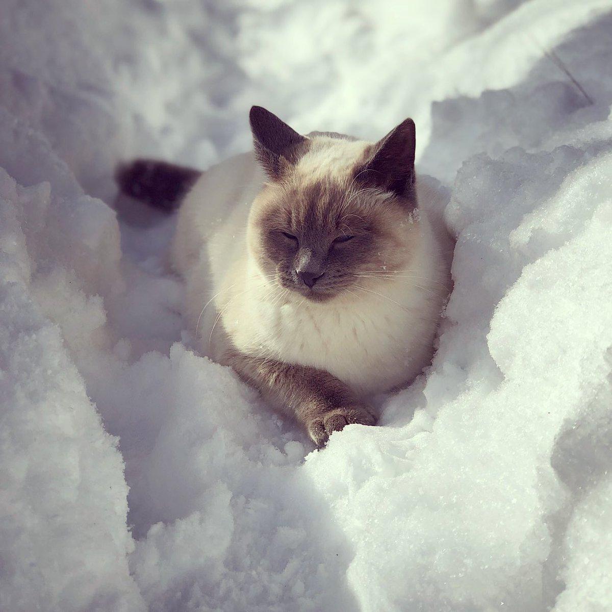 お庭と家の中を行ったり来たり…雪を存分に楽しむ猫たち。 (゚ー゚*)。oO(つよい…。。)