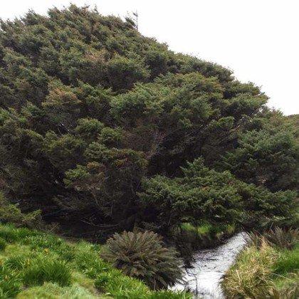 El árbol más solitario del mundo data el...