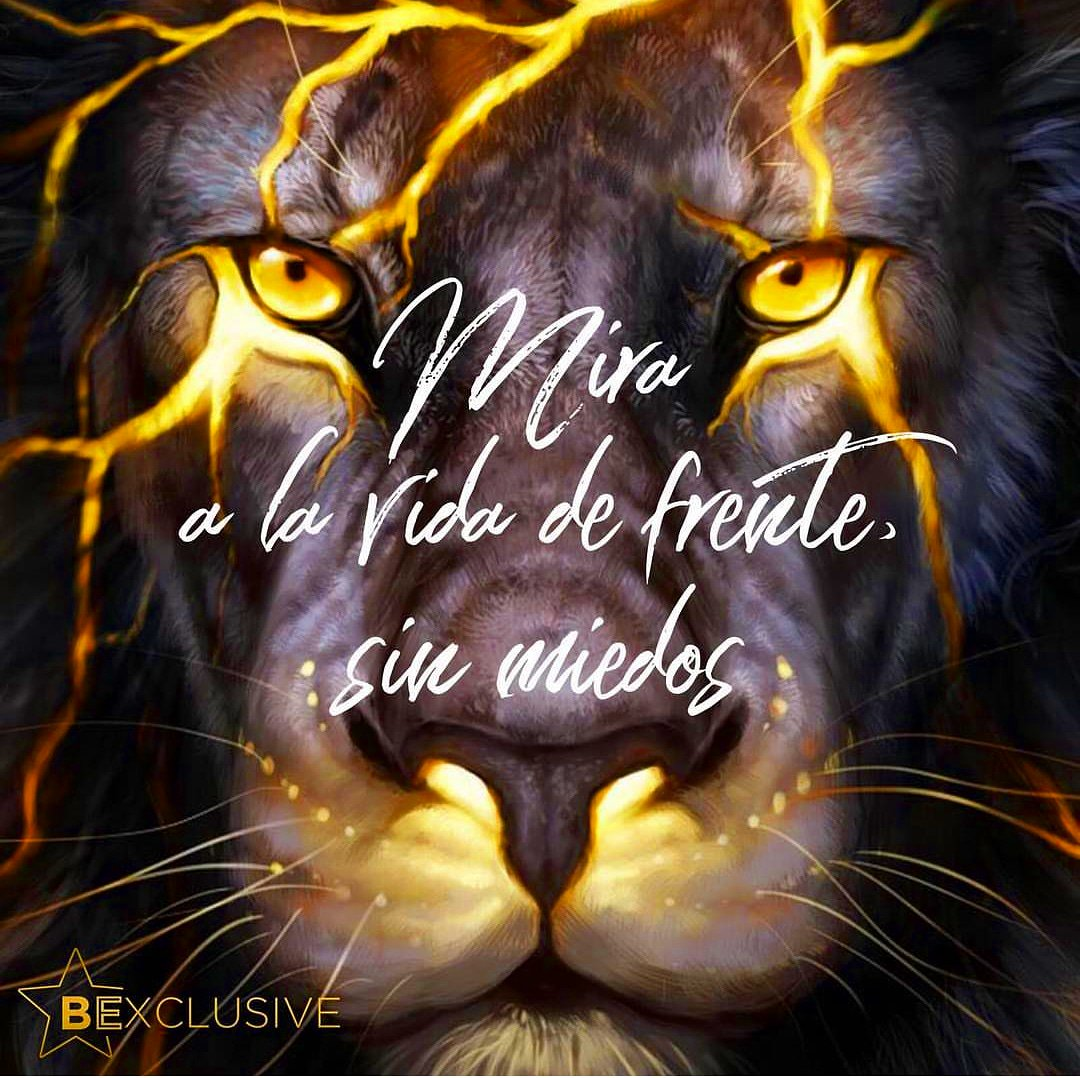 Mira a la vida de frente y sin miedos 🐯...