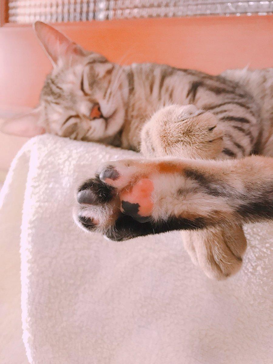 #タイムラインを寝ている猫でいっぱいにしよう