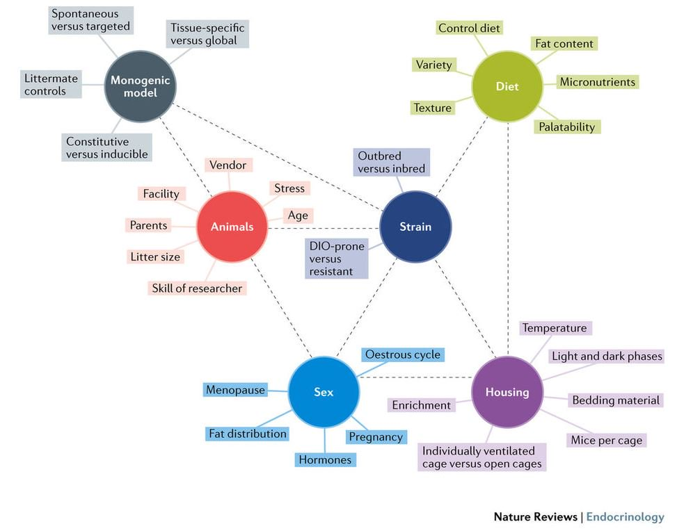 download Практикум по анатомии мозга человека: Учебное пособие для студентов