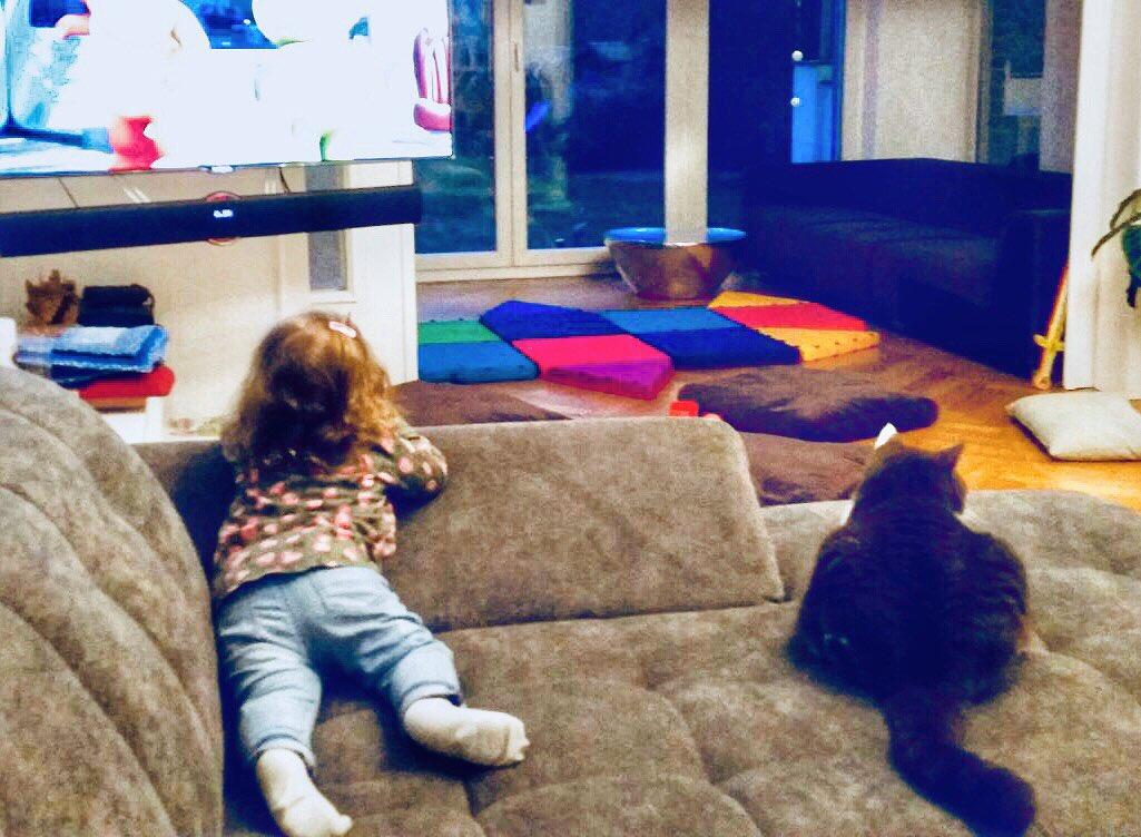 dr nico rose on twitter sollte man katzen im alter von. Black Bedroom Furniture Sets. Home Design Ideas
