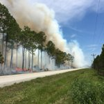 #USFWS firefighters plan to conduct a 224 acre prescribed fire today at Lower Suwannee NWR with assistance from a Prescribed Fire Training Center module #FLfire #rxfire #GoodFires 🔥