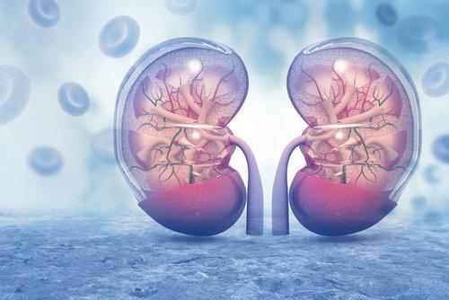 #AconteceuNaSaúde   Rins e coração: doenças renais podem levar a problemas cardíacos. Entenda: https://t.co/NLRb6ojFI3