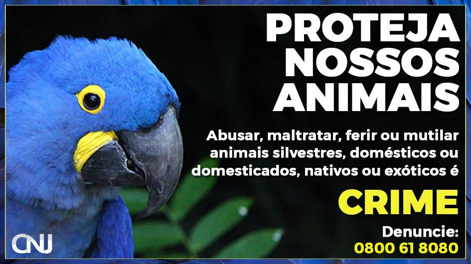 🐒🐍🐯 A Linha Verde do @brasil_IBAMA recebe denúncias pelo telefone 0800 61 8080. Saiba mais: https://t.co/5Q2dXCKICx