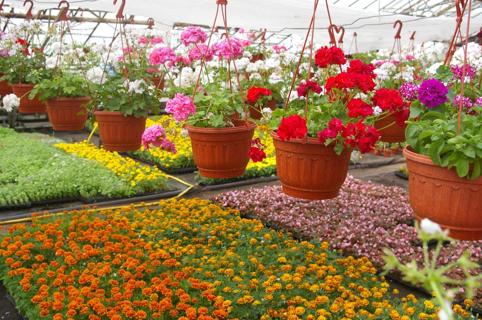 Где заказать цветы для дачи, цветы недорого рукомойниками